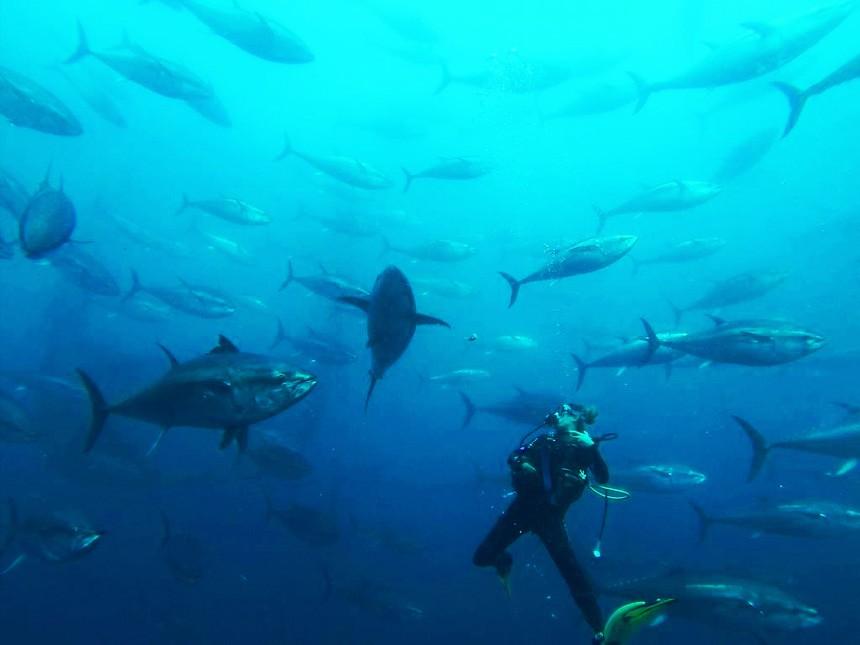Tuna tour en Ametlla de Mar