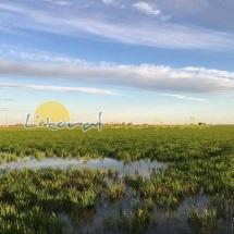 Bonitos paisajes del Delta del Ebro y los arrozales