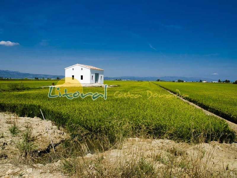 Bonito campos de arroz del Delta del Ebro