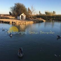 parque-natural-del-delta-del-ebro-221