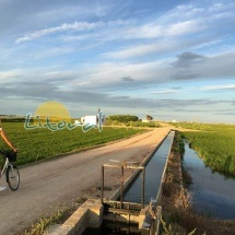 Caminos por los arrozales verdes del Delta del Ebro