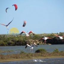Avistamiento de Flamencos en el Delta del Ebro