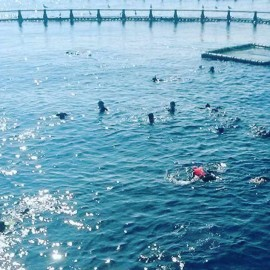 Actividades de Tuna Tour nadando con atunes gigantes en el mar cerca de l'Ametlla de Mar
