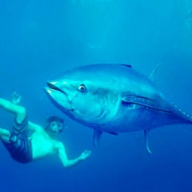Submarinismo con el Tuna Tour